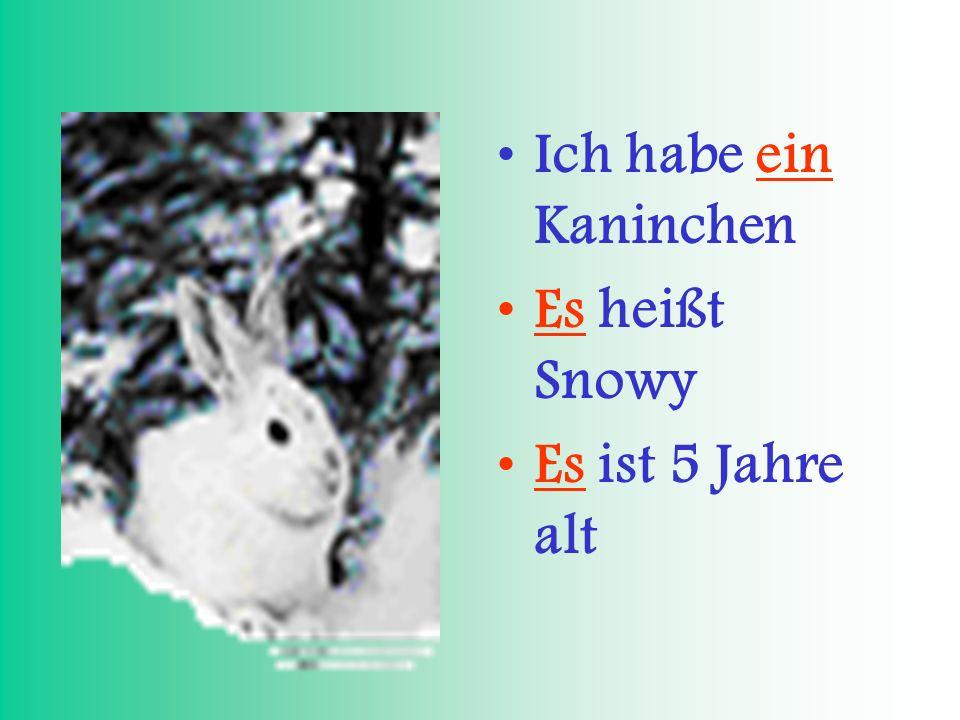 Ich habe ein Kaninchen Es heißt Snowy Es ist 5 Jahre alt