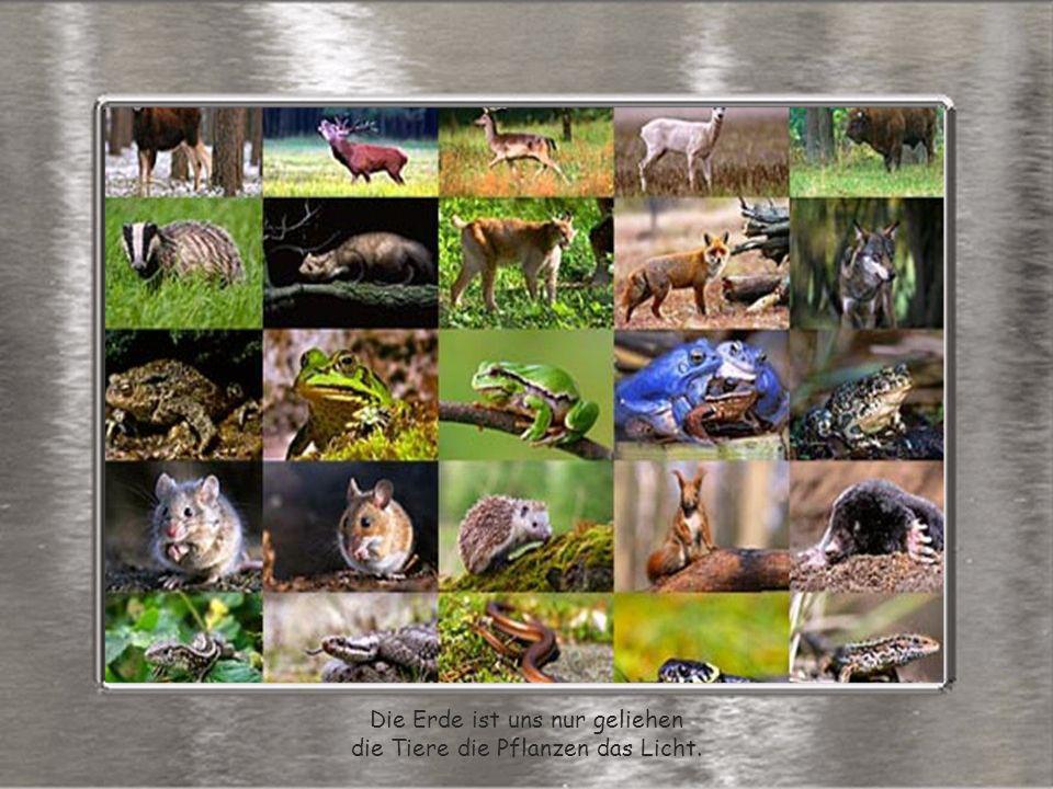 Die Erde ist uns nur geliehen die Tiere die Pflanzen das Licht.