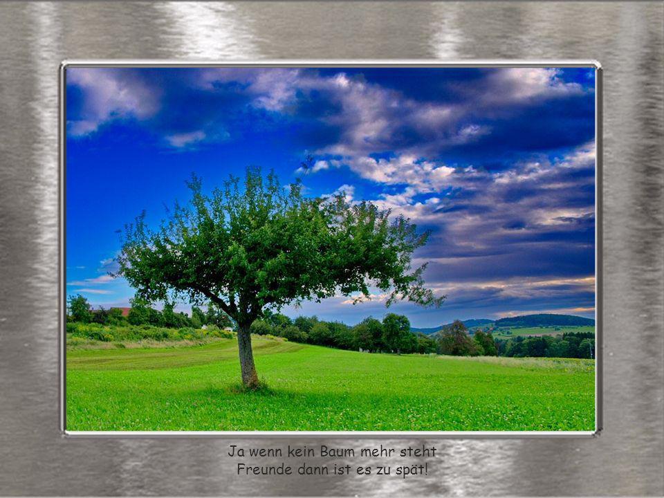 Ja wenn kein Baum mehr steht Freunde dann ist es zu spät!