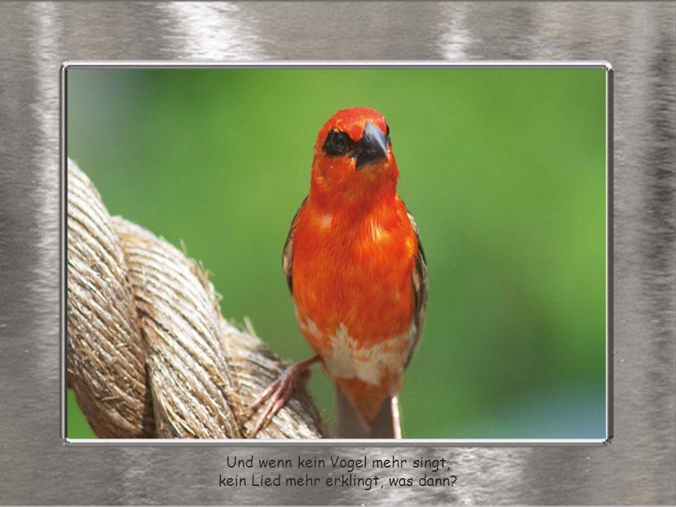 Und wenn kein Vogel mehr singt, kein Lied mehr erklingt, was dann