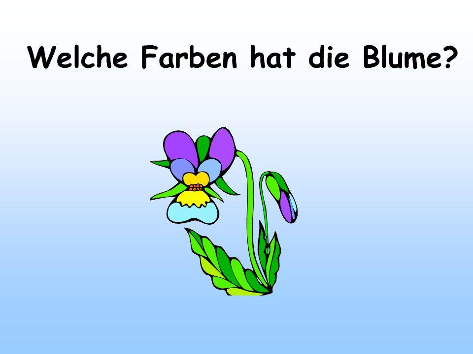 Welche Farben hat die Blume
