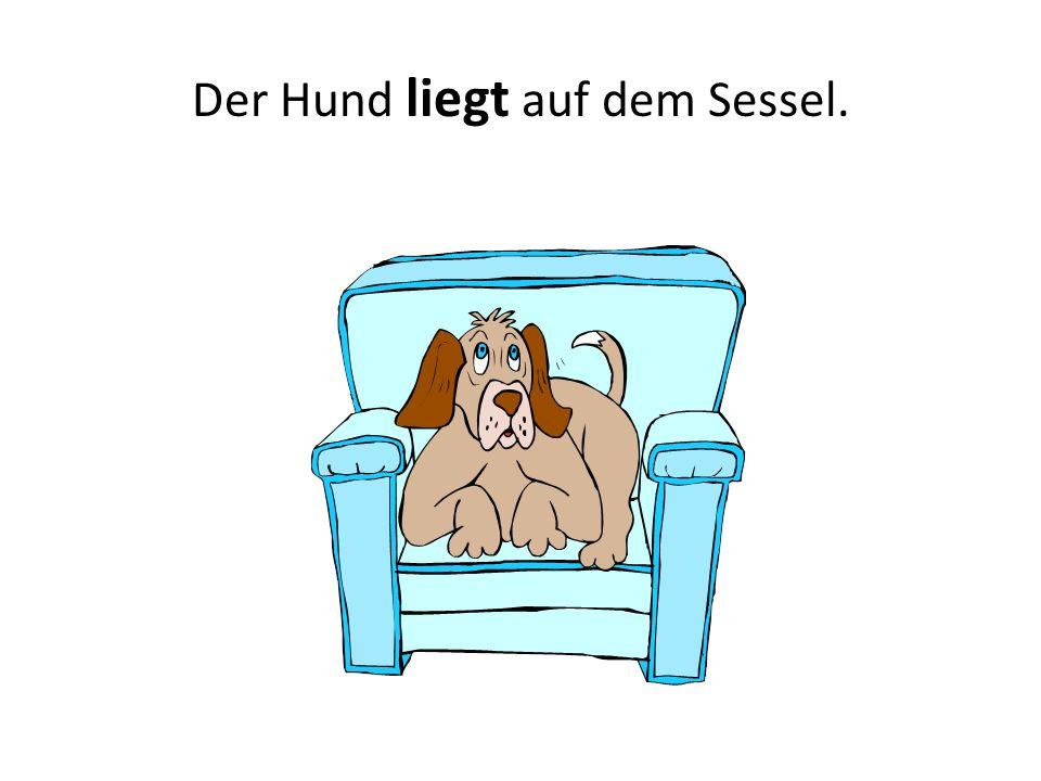 Der Hund liegt auf dem Sessel.