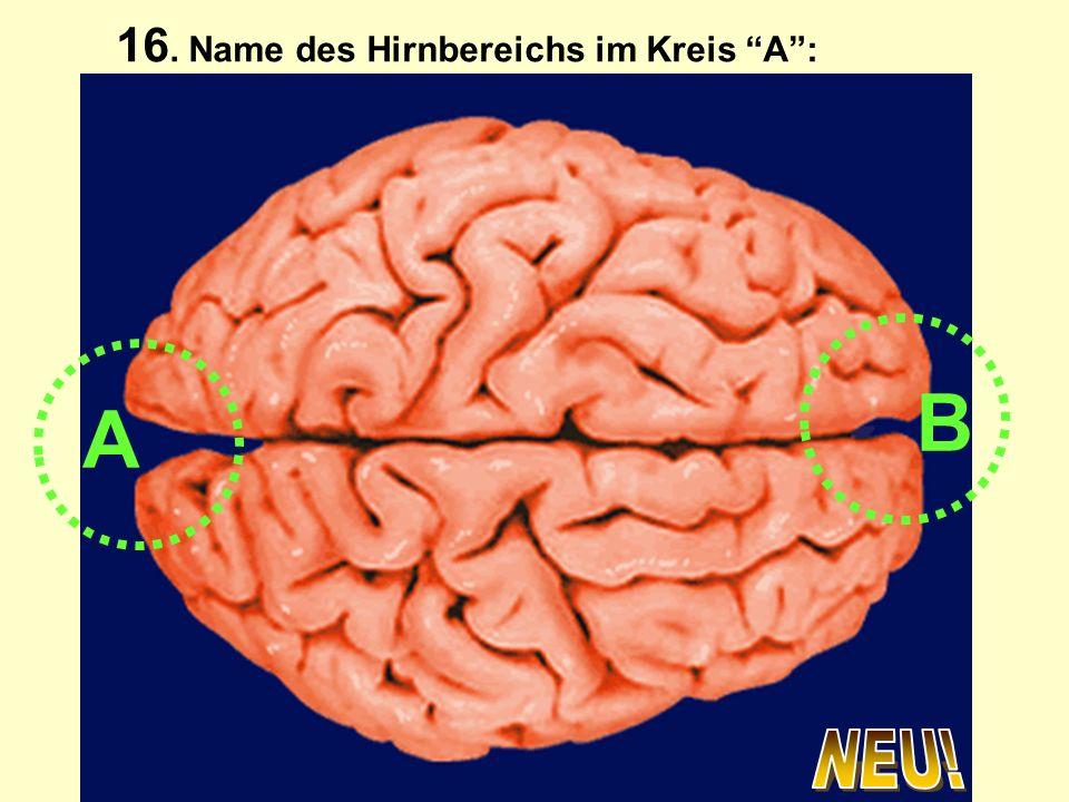 16. Name des Hirnbereichs im Kreis A :