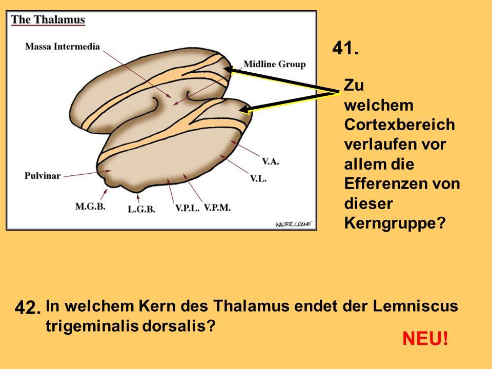 41. Zu. welchem. Cortexbereich verlaufen vor allem die Efferenzen von. dieser Kerngruppe 42.