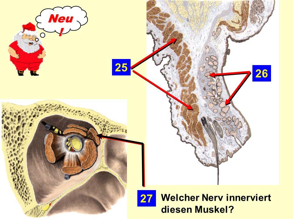 Neu! 25 26 27 Welcher Nerv innerviert diesen Muskel