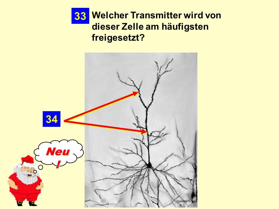 33 Welcher Transmitter wird von dieser Zelle am häufigsten freigesetzt 34 Neu!