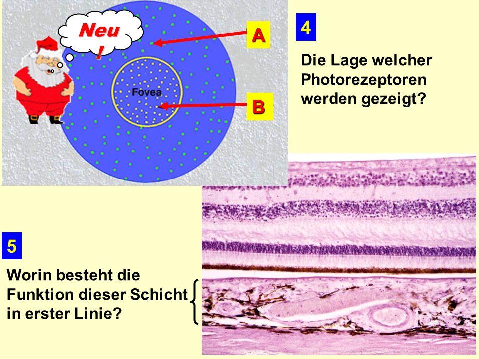 Neu! 4 A B 5 Die Lage welcher Photorezeptoren werden gezeigt