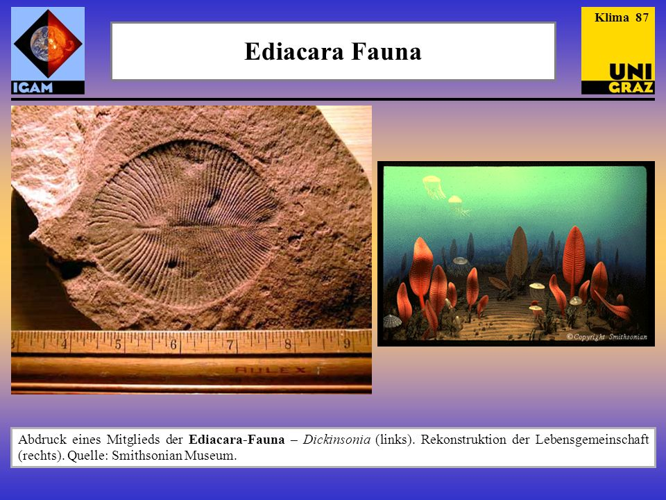 Klima 87 Ediacara Fauna.