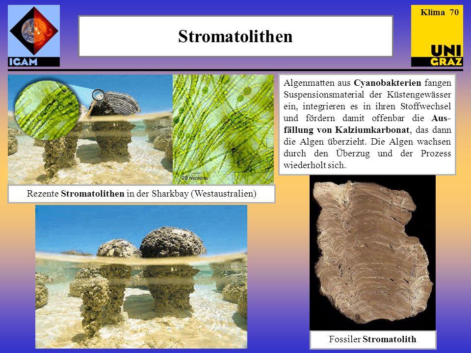 Klima 70 Stromatolithen.