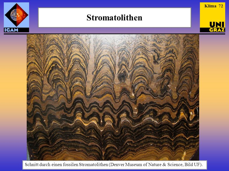 Klima 72 Stromatolithen.
