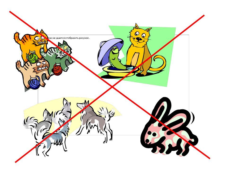 Ich habe……. einen Hund eine Katze ein Meerschweinchen eine Maus
