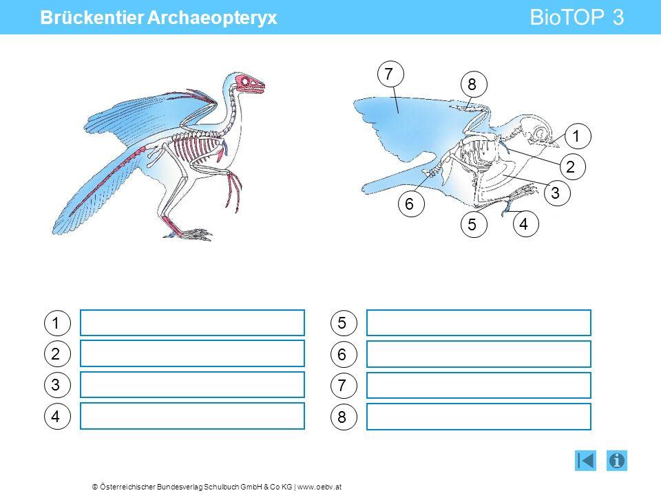 Brückentier Archaeopteryx