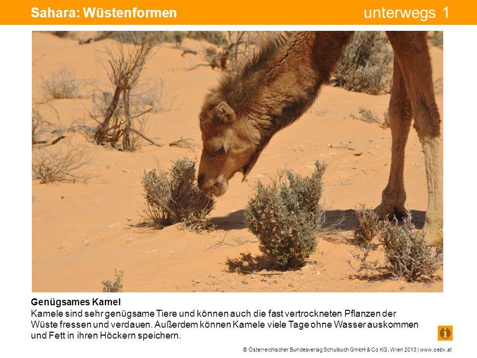 Sahara: Wüstenformen Genügsames Kamel