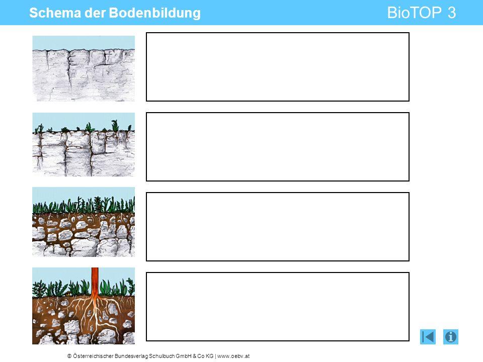 Schema der Bodenbildung