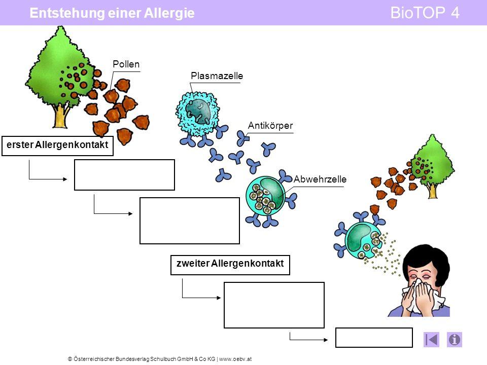 Entstehung einer Allergie