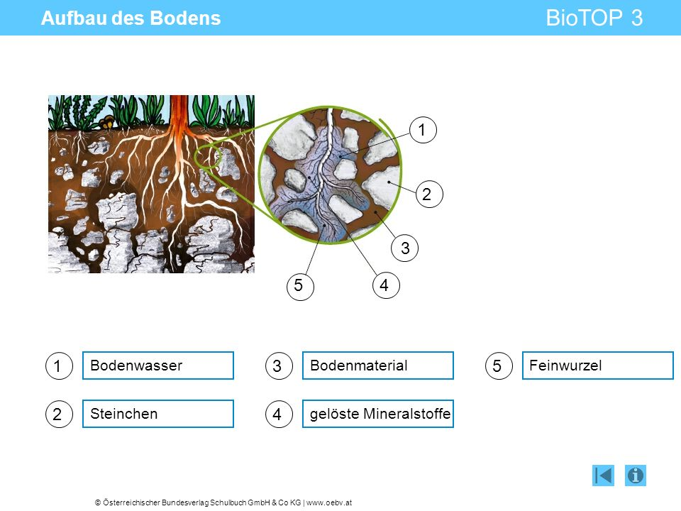 Aufbau des Bodens 1 2 3 4 5 1 3 5 2 4 Bodenwasser Bodenmaterial