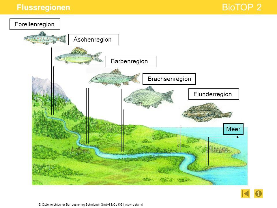 Flussregionen Forellenregion Äschenregion Barbenregion Brachsenregion