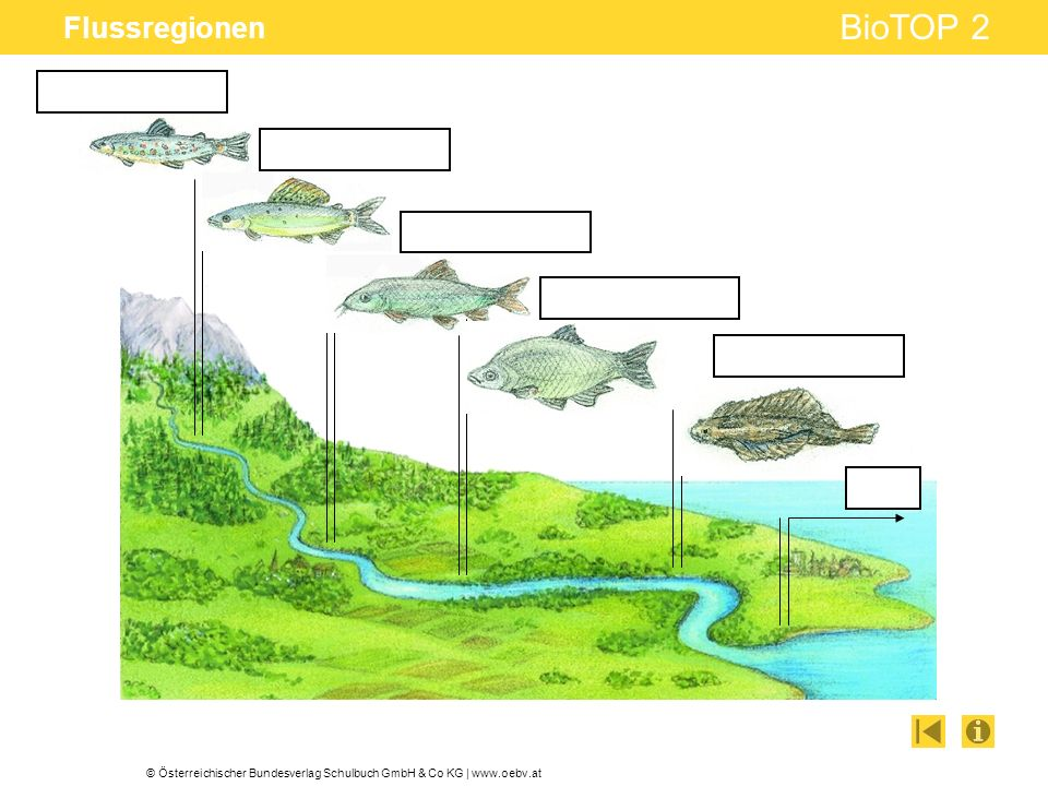 Flussregionen