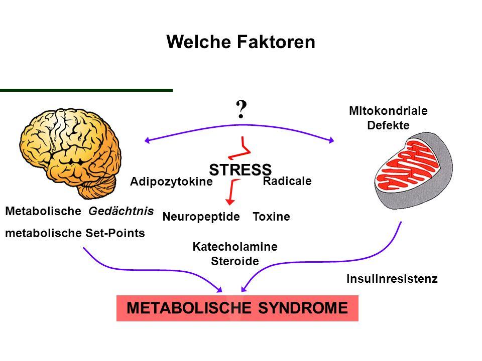 Mitokondriale Defekte Katecholamine Steroide METABOLISCHE SYNDROME