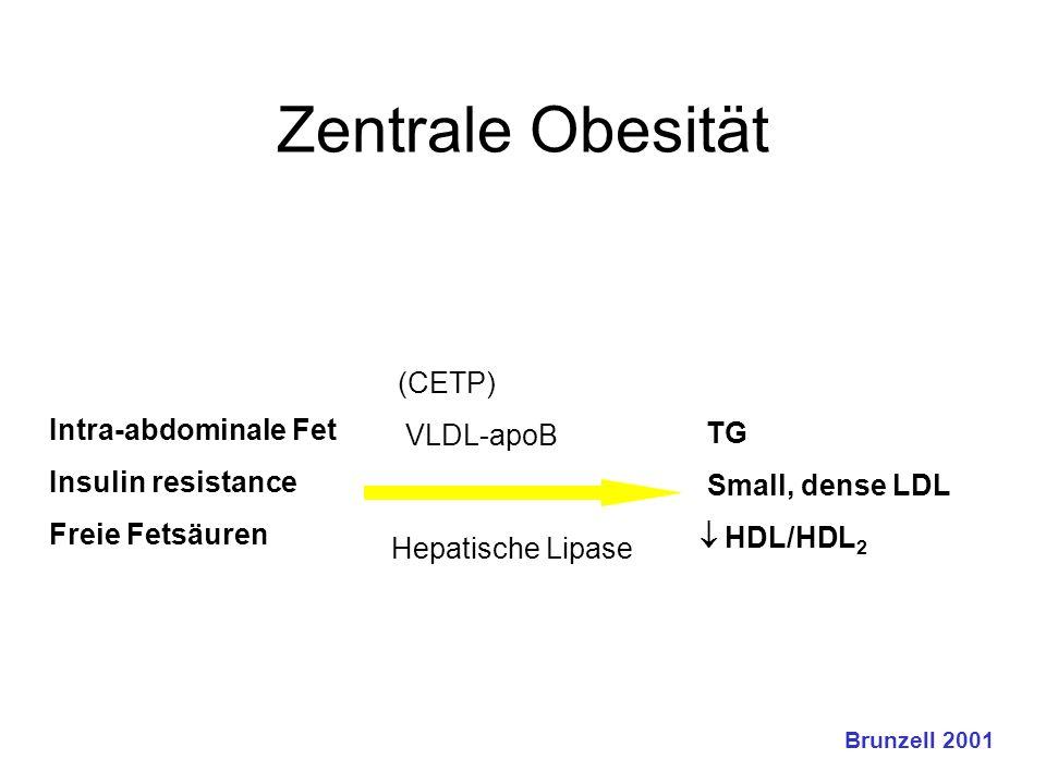 Zentrale Obesität (CETP)  VLDL-apoB  Intra-abdominale Fet