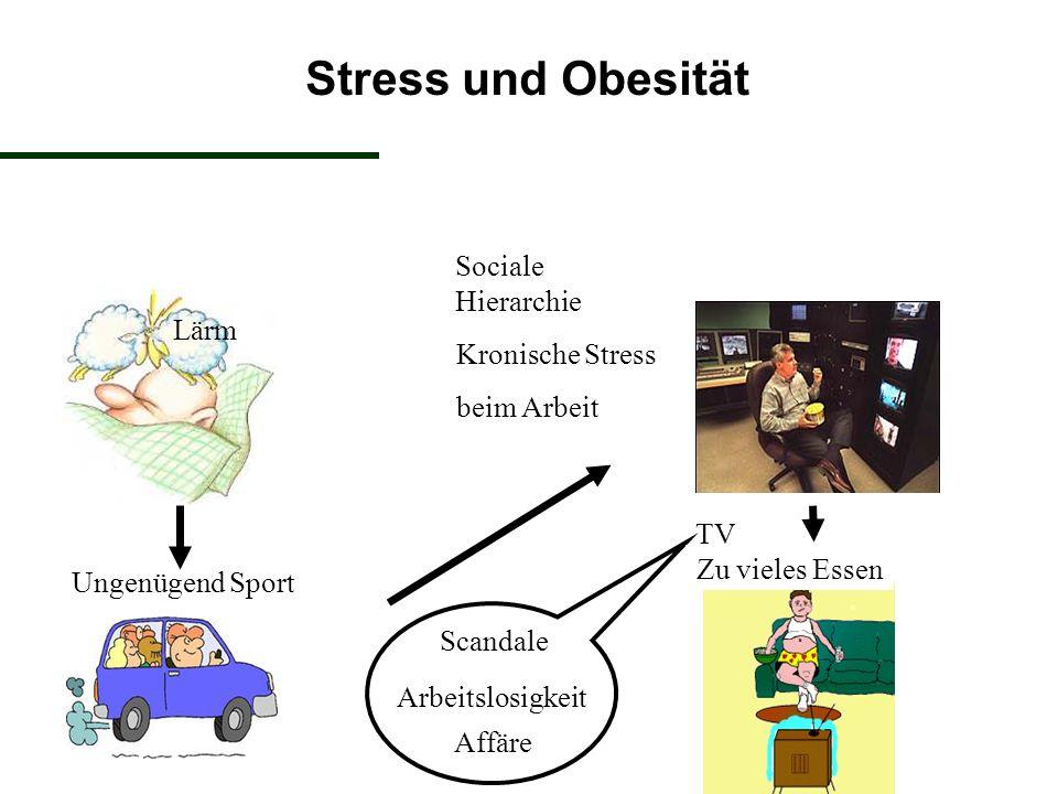 Stress und Obesität Sociale Hierarchie Lärm Kronische Stress