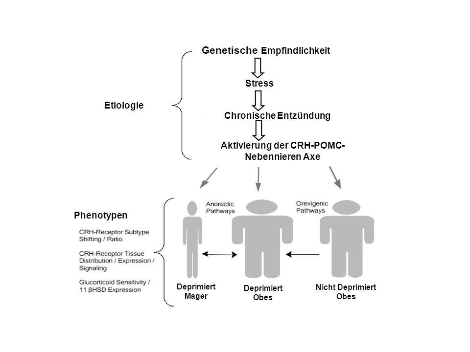 Chronische Entzündung Aktivierung der CRH-POMC-Nebennieren Axe