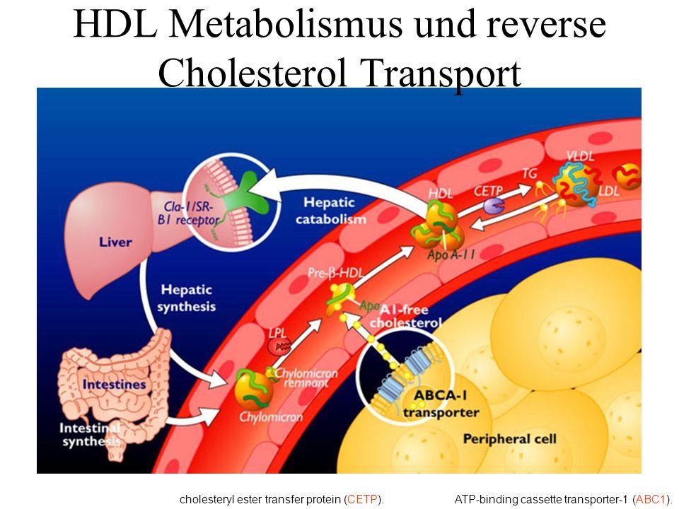 HDL Metabolismus und reverse Cholesterol Transport