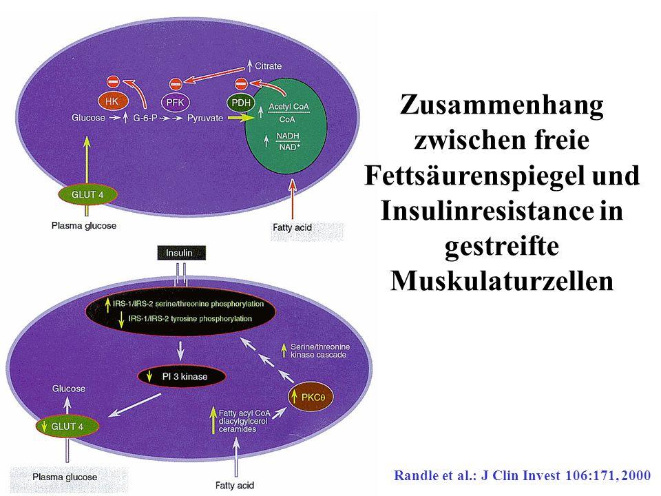Zusammenhang zwischen freie Fettsäurenspiegel und Insulinresistance in gestreifte Muskulaturzellen