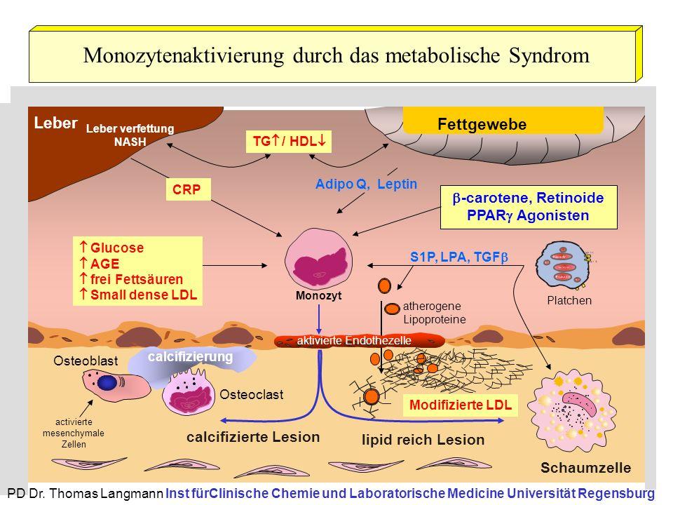 Monozytenaktivierung durch das metabolische Syndrom