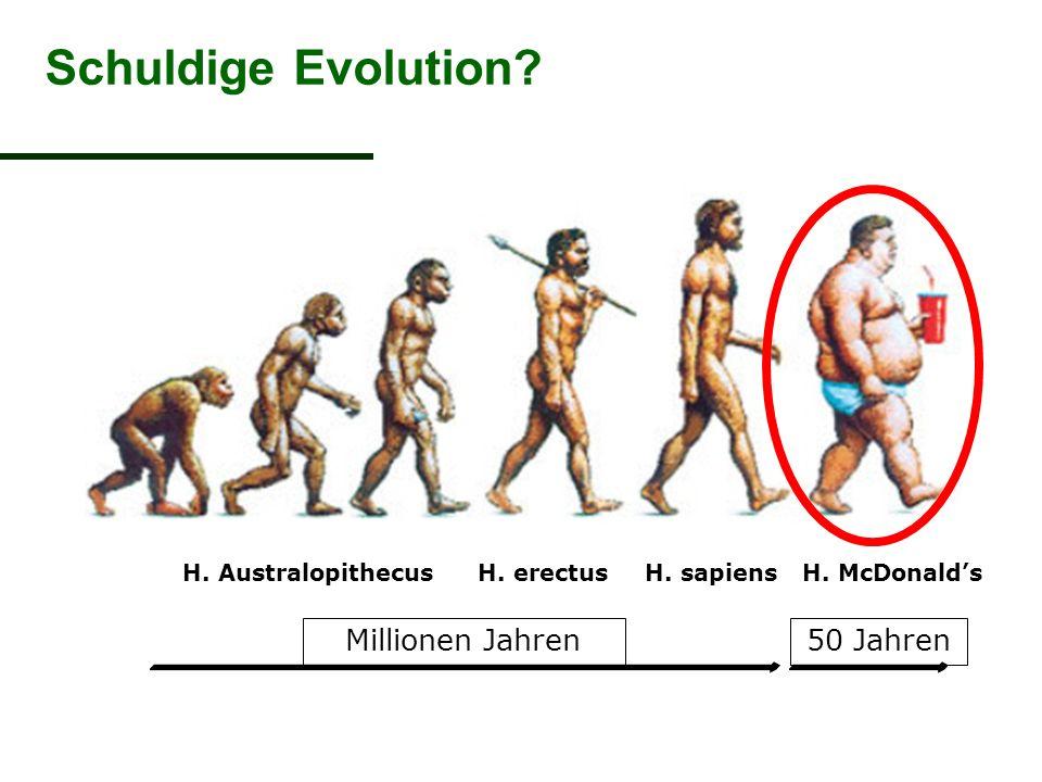 Schuldige Evolution Millionen Jahren 50 Jahren H. Australopithecus