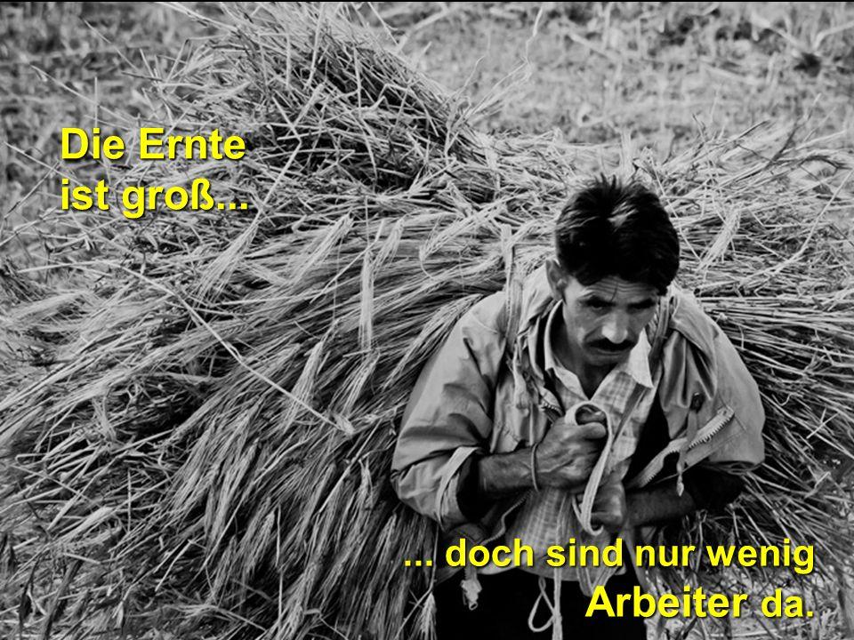 Die Ernte ist groß... ... doch sind nur wenig Arbeiter da.