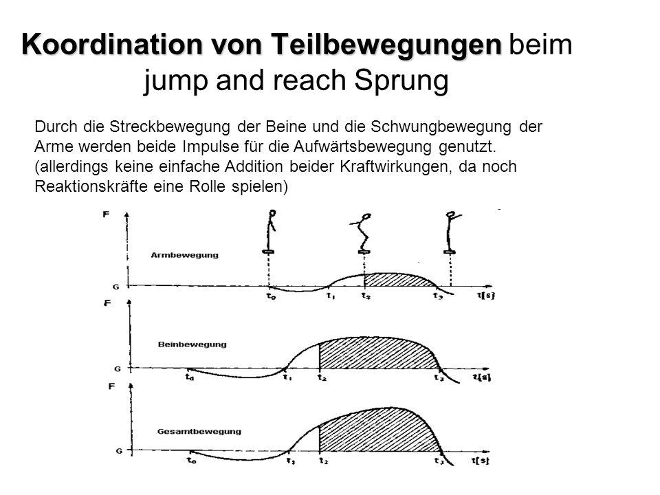 Koordination von Teilbewegungen beim jump and reach Sprung