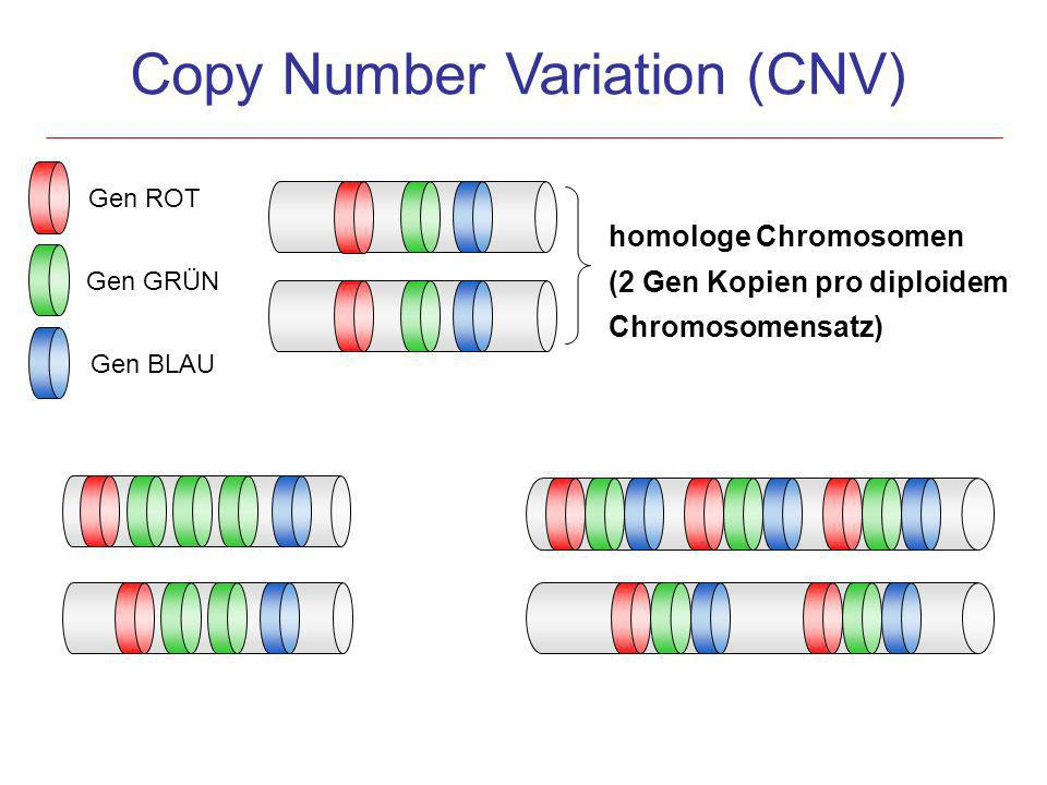 Copy Number Variation (CNV)