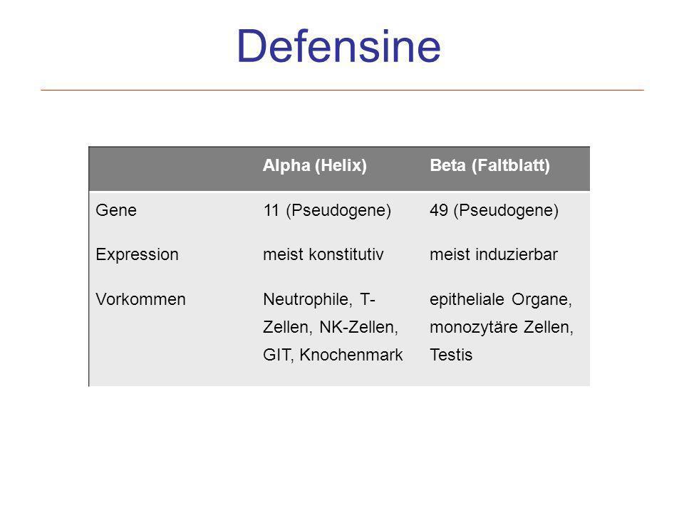 Defensine Alpha (Helix) Beta (Faltblatt) Gene 11 (Pseudogene)