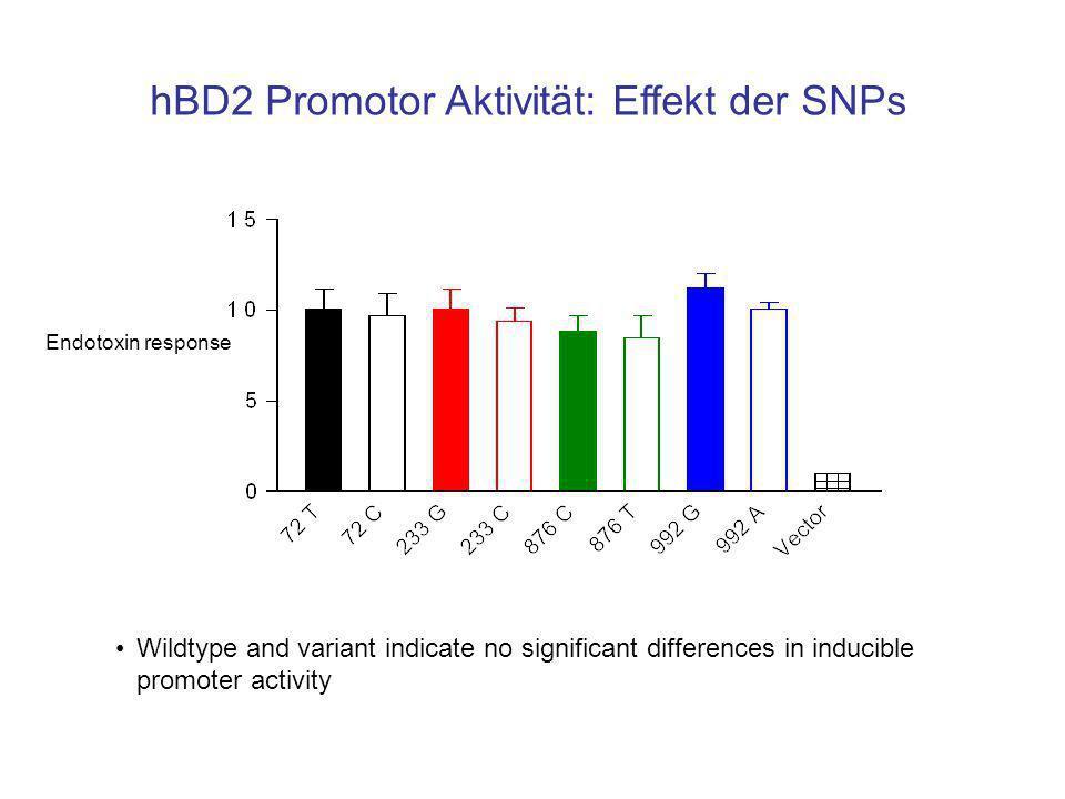 hBD2 Promotor Aktivität: Effekt der SNPs