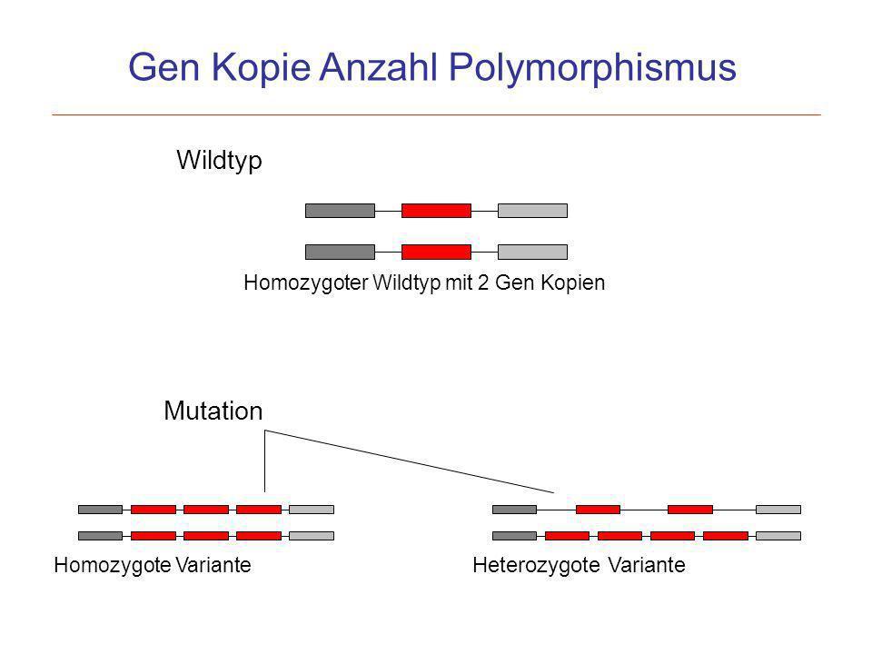 Gen Kopie Anzahl Polymorphismus