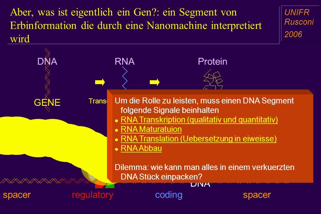 Aber, was ist eigentlich ein Gen