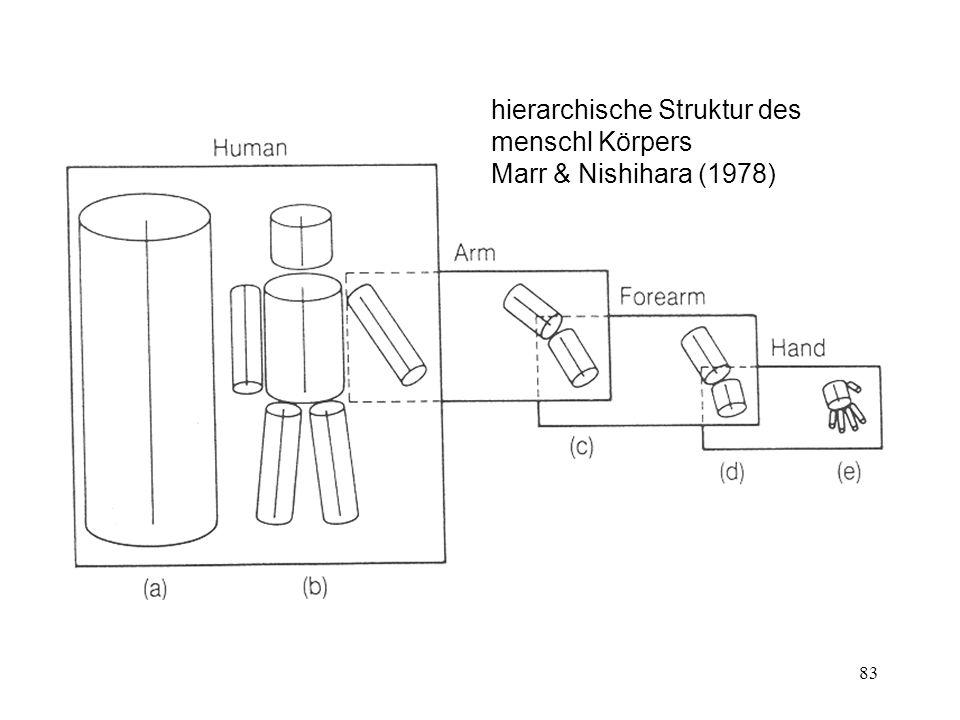 hierarchische Struktur des menschl Körpers Marr & Nishihara (1978)