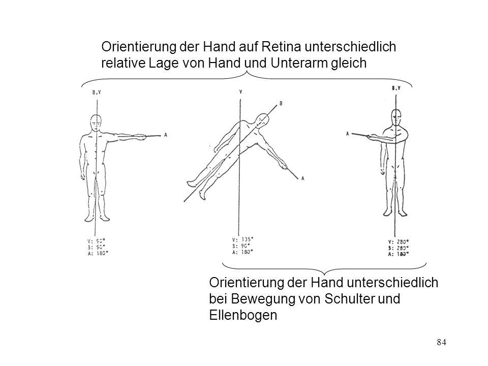 Orientierung der Hand auf Retina unterschiedlich relative Lage von Hand und Unterarm gleich