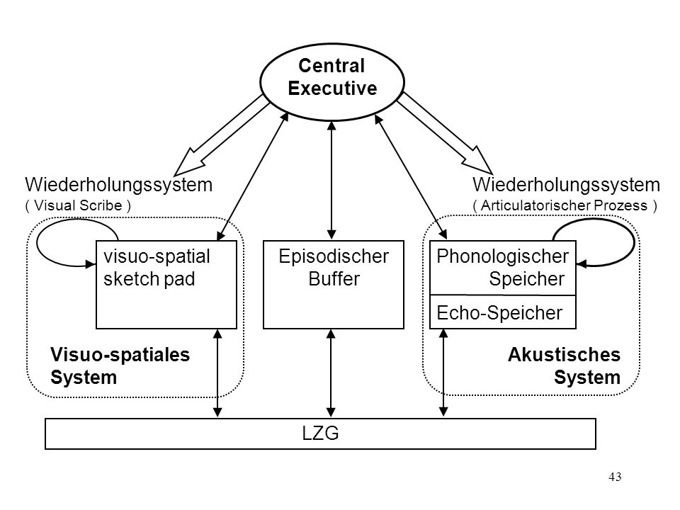 Central Executive Episodischer Buffer. visuo-spatial sketch pad. Phonologischer Speicher.