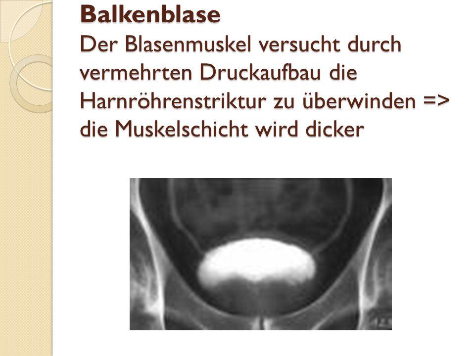 Balkenblase Der Blasenmuskel versucht durch vermehrten Druckaufbau die Harnröhrenstriktur zu überwinden => die Muskelschicht wird dicker