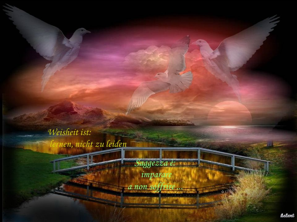 Weisheit ist: lernen, nicht zu leiden Saggezza è: imparare a non soffrire ...
