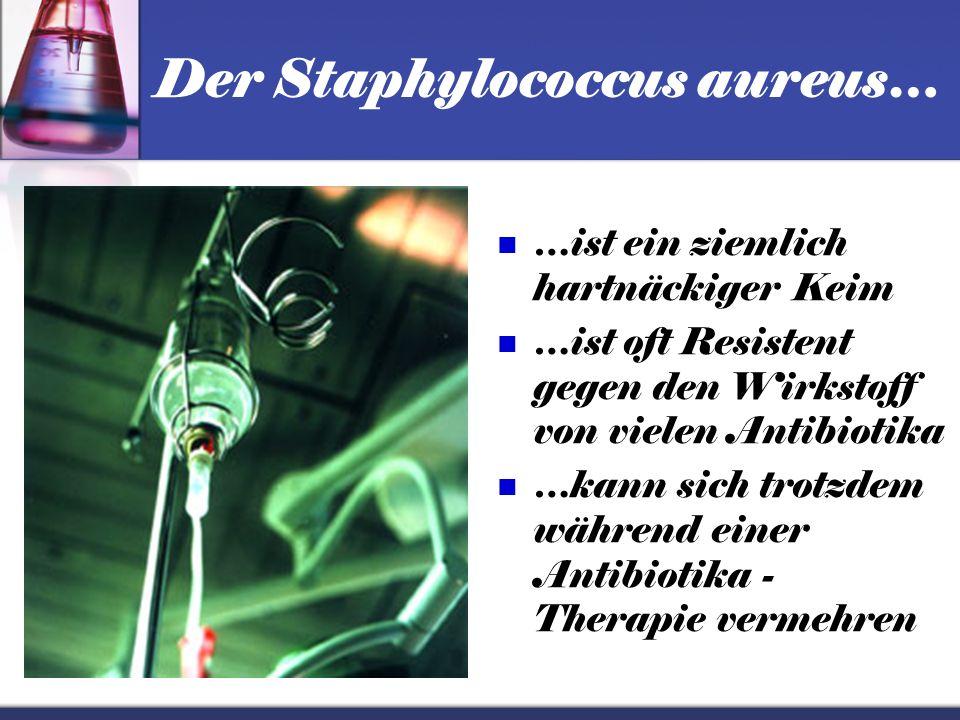 Der Staphylococcus aureus…