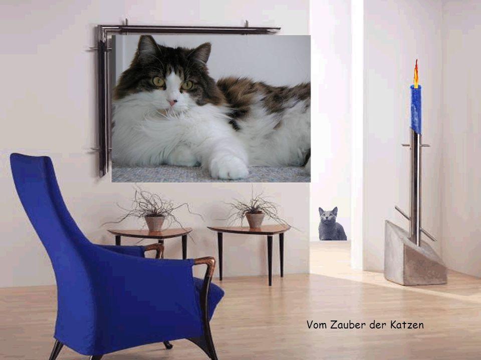 Vom Zauber der Katzen