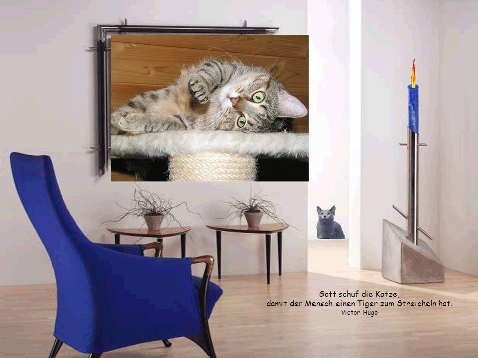 Gott schuf die Katze, damit der Mensch einen Tiger zum Streicheln hat
