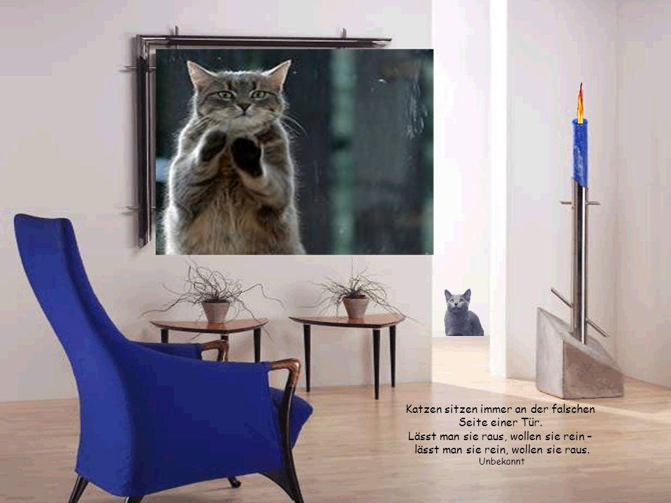 Katzen sitzen immer an der falschen Seite einer Tür