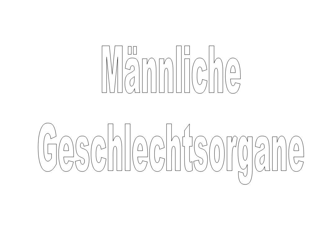 Tolle Anatomie Männlichen Fortpflanzungsorgane Bilder - Menschliche ...