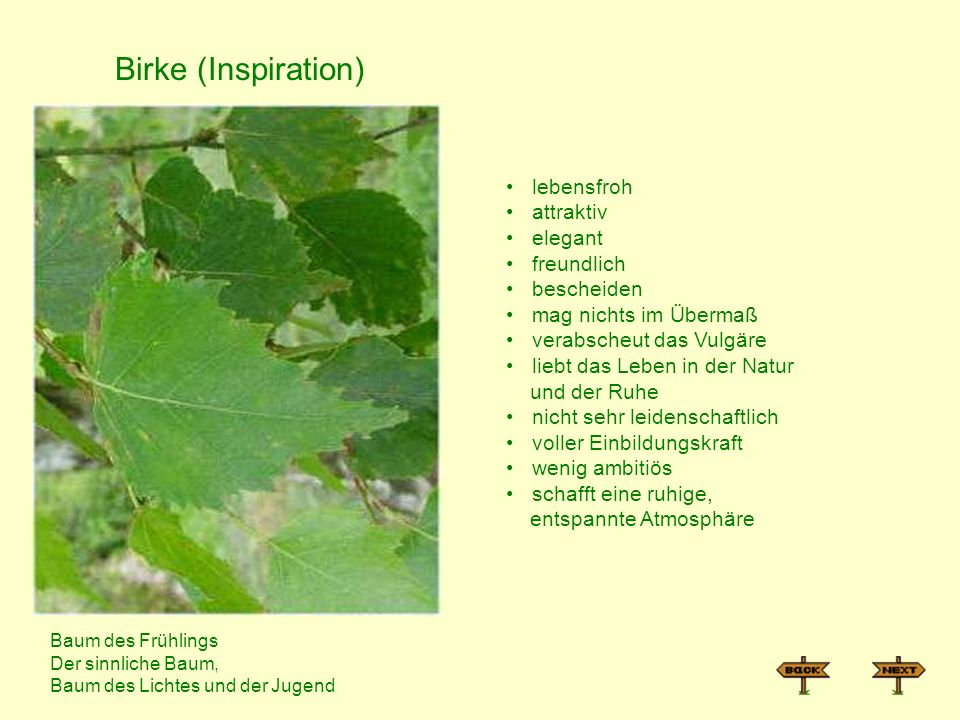 Birke (Inspiration) lebensfroh attraktiv elegant freundlich bescheiden
