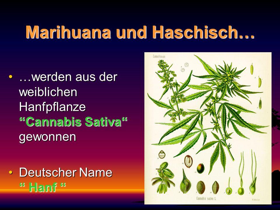 Marihuana und Haschisch…