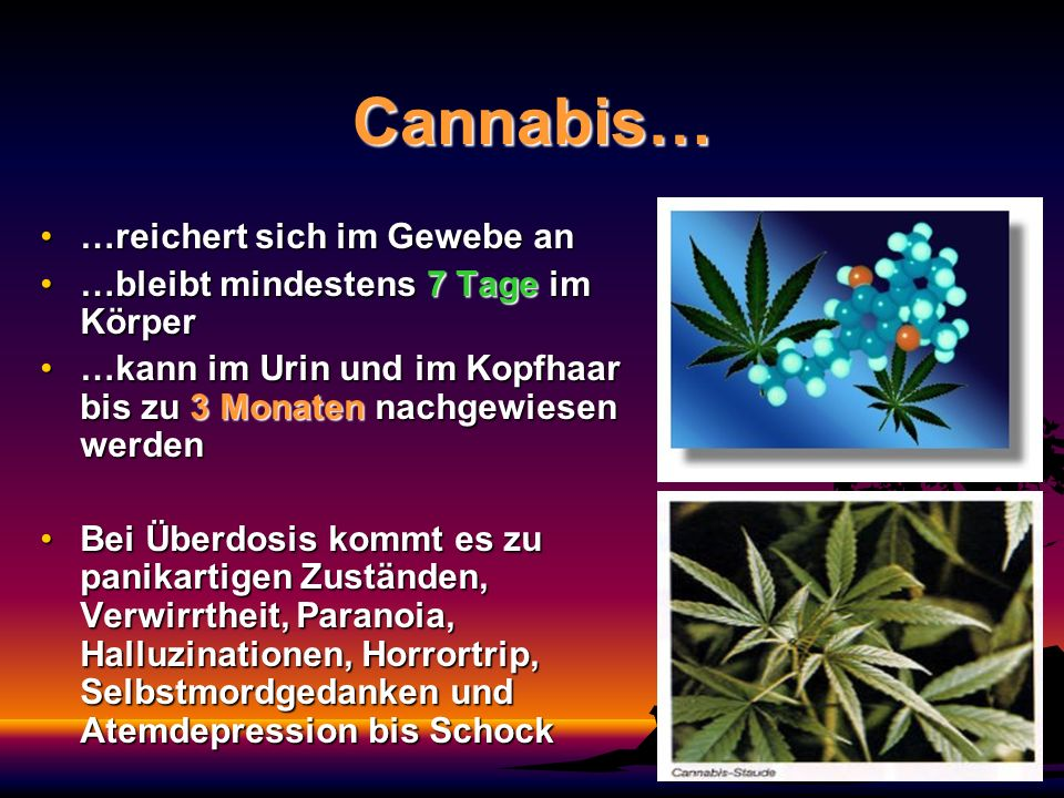 Cannabis… …reichert sich im Gewebe an